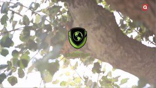 Green Cup: Un torneo por el mundo