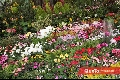 Coloridas flores.