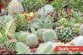 Gran variedad de cactus.