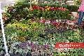 Gran diversidad en plantas y flores.
