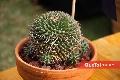 Bellos cactus.