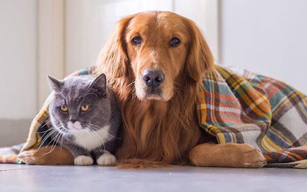 Consejos para proteger a tu mascota del frio