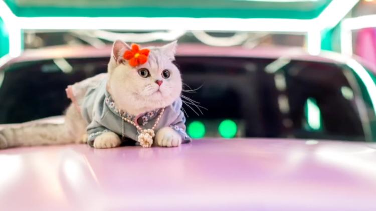 Conoce a Mao Mao, el gatito modelo que gana más de mil dólares por evento