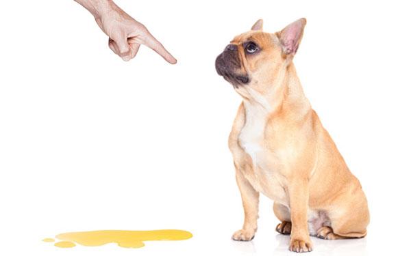 Este repelente casero evitará que tus mascotas se orinen dentro de tu casa