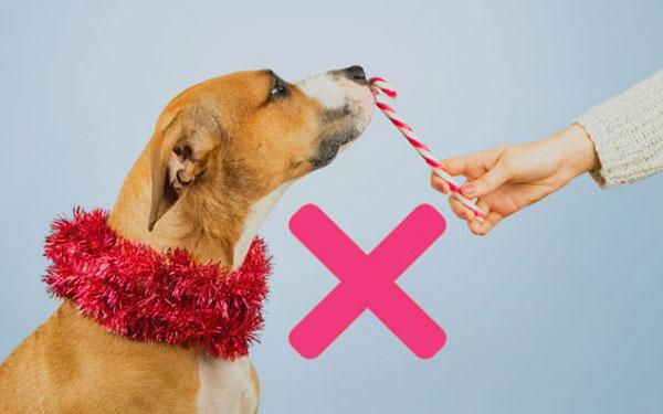 Razones por las que tu mascota no debe comer dulces